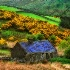 © Anne Hickey PhotoID# 6509131: Irish Cottage