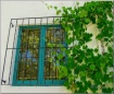 Window and Vine