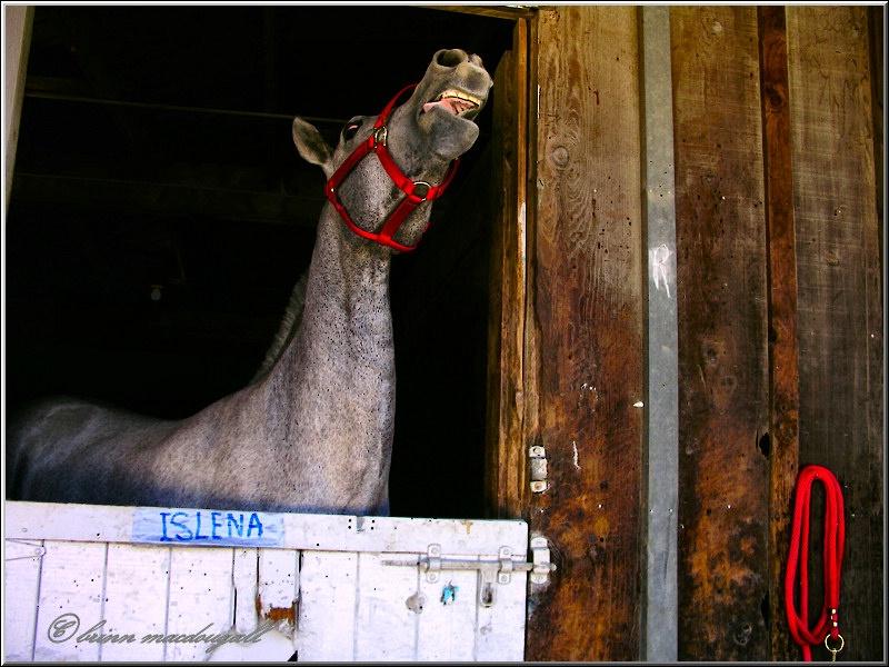 Islena behaving Badly
