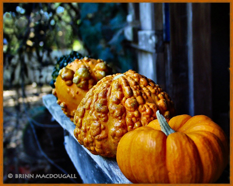 Pumpkins in Scary Places