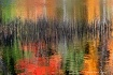 Reeds in Fall Col...