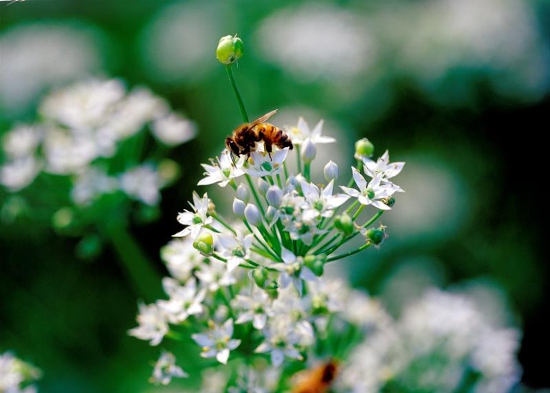 Flower Feast - ID: 7349141 © Farrin Manian