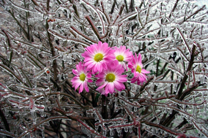 Winter Bouquet2 - ID: 7354896 © Farrin Manian