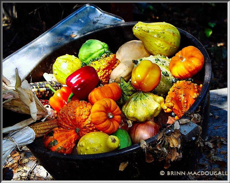 Pot of Harvest