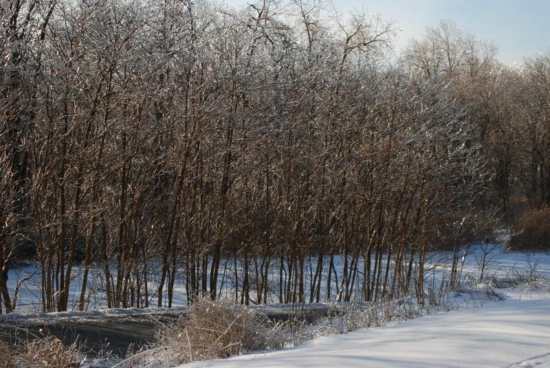 icy fenceline - ID: 7683256 © Frieda Weise