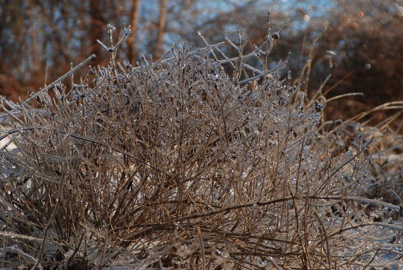 sparkling weeds - ID: 7683282 © Frieda Weise