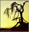 Tortus Tree