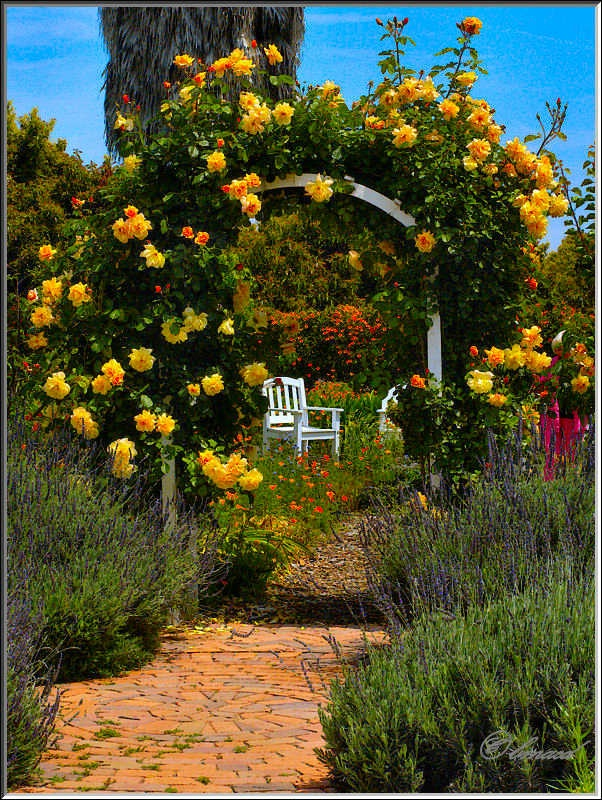 Arbor and Roses