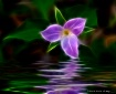 Purple Aglow