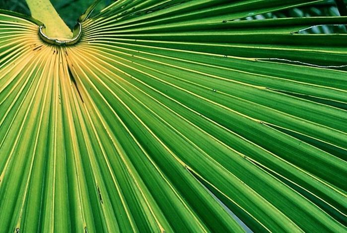 Large Leaf  Detail
