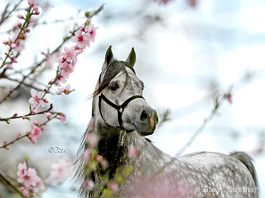 Spring in the Air - ID: 9837674 © Zita A. Strother