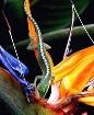 Tropical Color pe...