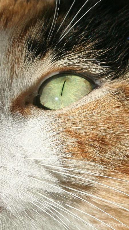 Milly's Eye - ID: 9955719 © Mary B. McGrath