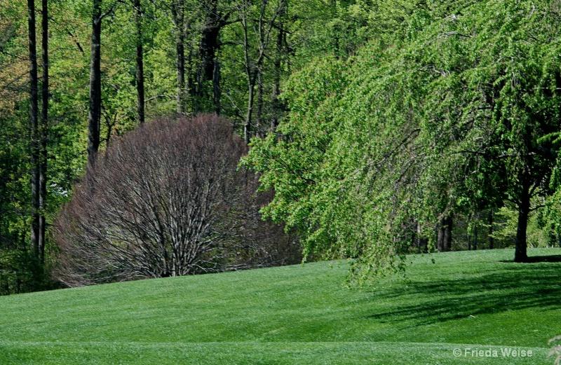 spring greens - ID: 10028340 © Frieda Weise