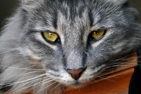 Cat's Eye View
