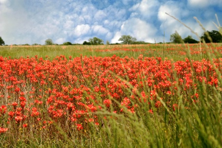 A Field Full Of Pretty