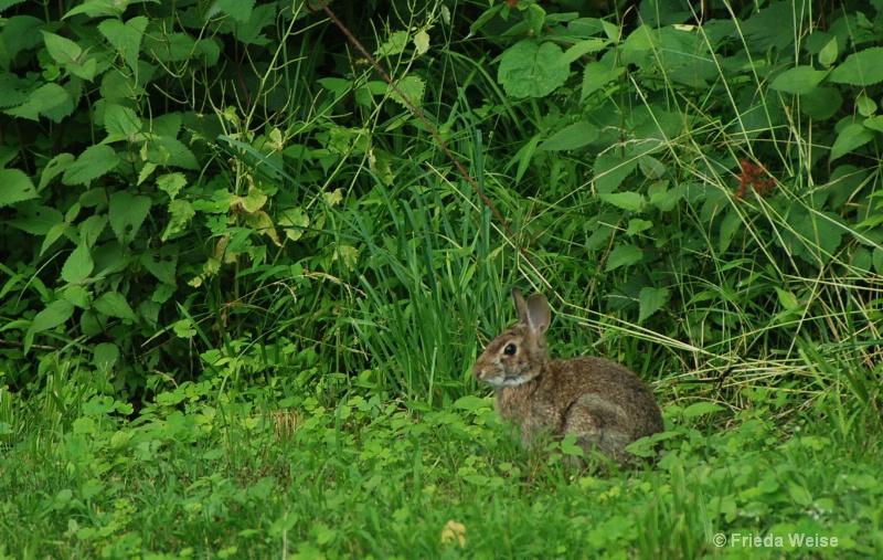 Bunny - ID: 10405724 © Frieda Weise