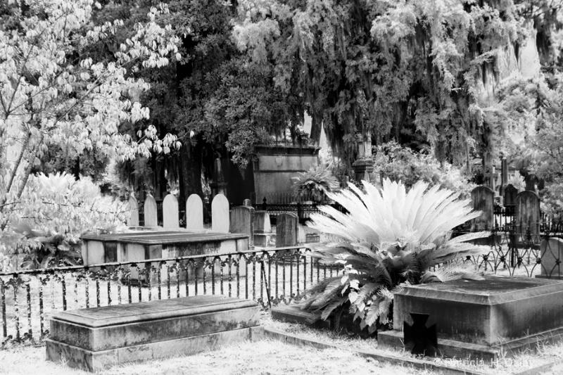 Laurel Grove Cemetery Scene