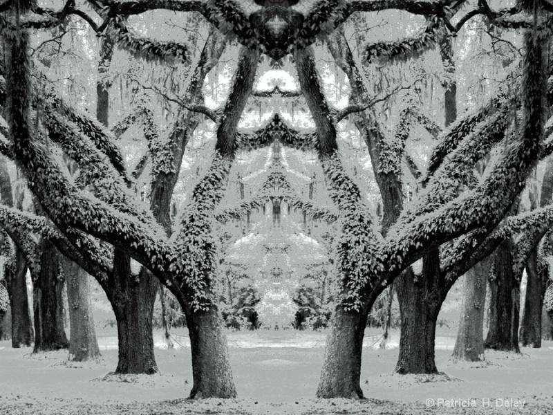 Wormsloe Mirrored Image