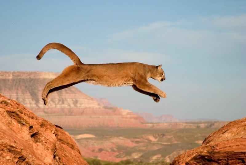 Taking the Big Leap - ID: 10929320 © Jim Miotke