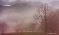 Foggy Medow
