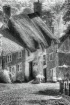 Shaftsbury-Gold H...