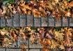 Autumn Browns