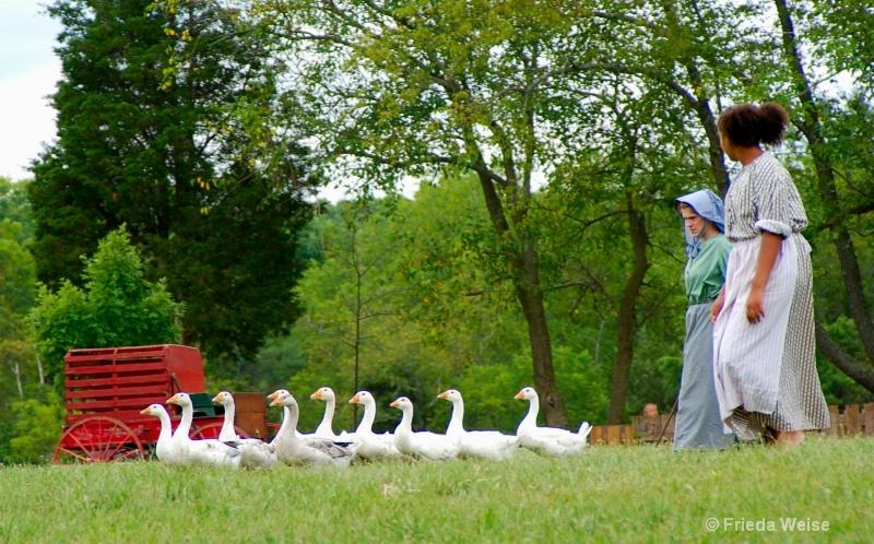 goose girls - ID: 11389810 © Frieda Weise
