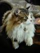 Mongo Cat