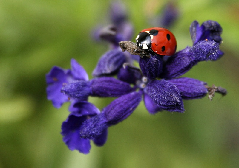 purple with bug
