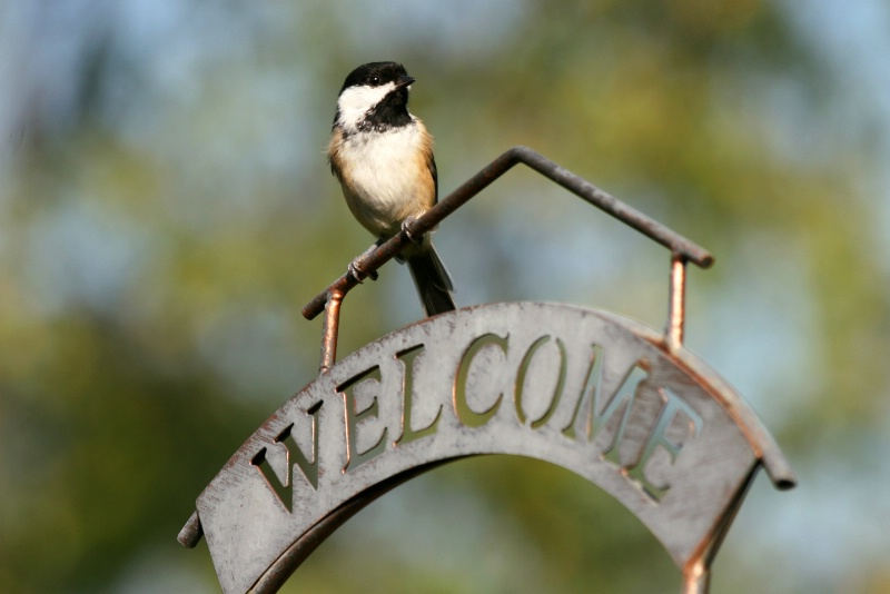 Every Birdie Welcome