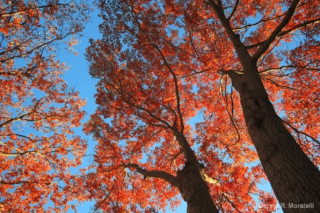 Bold Autumn color