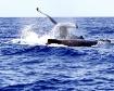 Humback Whales Fi...