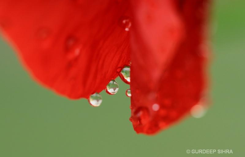 DROPS - ID: 12791171 © GURDEEP SIHRA