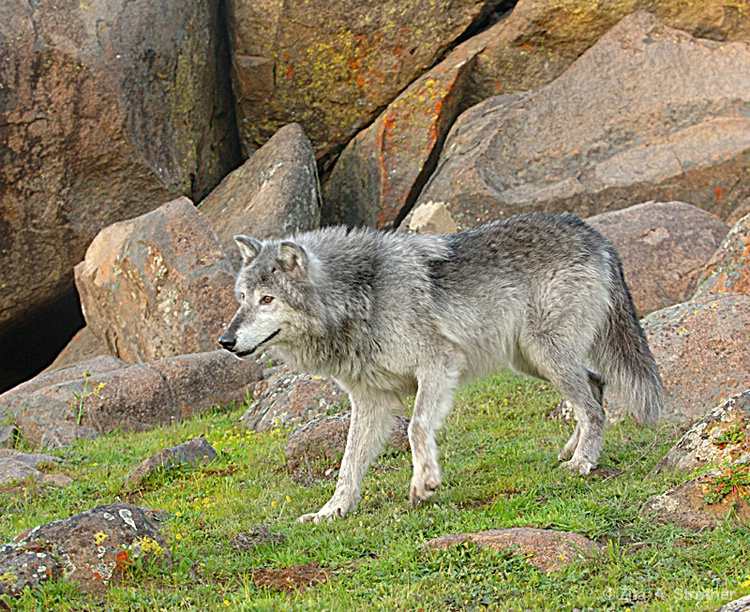 Gray Spirit - ID: 12861360 © Zita A. Strother