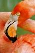 Flamingo Twist