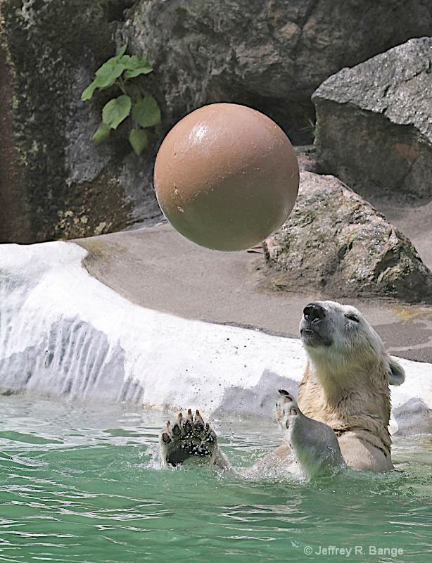 """""""Polar Bear Water Polo"""""""