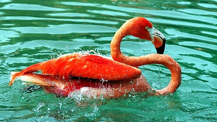 Flamingo Splash