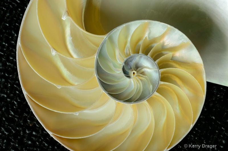 Nautilus SeaShell Design 2