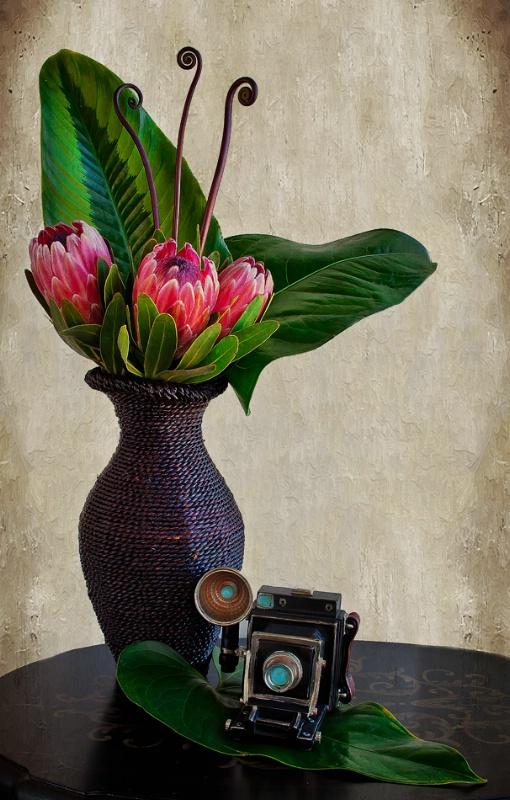 Picture Perfect Protea