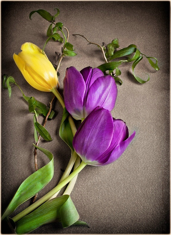 Faux  Hand Tinted Tulips