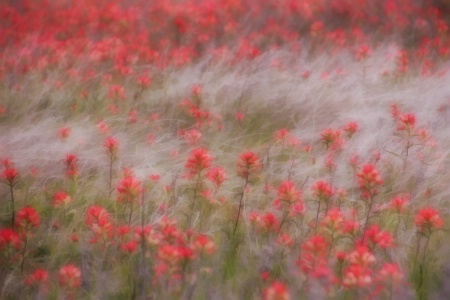 Buzzy Dreamy Flower Field
