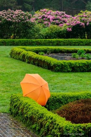 Umbrella, Garden, Rain