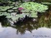 Peaceful Reflecti...