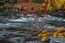 Autumn at Oxtongue Rapids