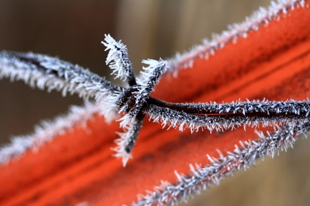 Frosty Wire And Fence Post
