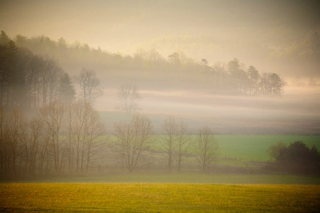 Tulle Fog