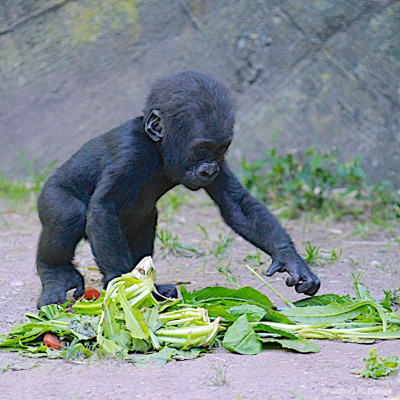 """Mom Said I Have To Eat My Greens"""