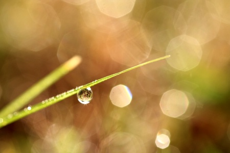 Dewdrops On Grass With Bokeh