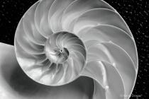 Nautilus Shell Design